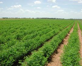 Industrial land Sale in derabassi - 12 acre in Industrial Area .